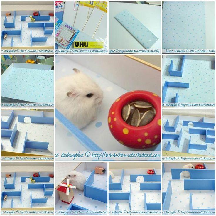 Best 25+ Hamster Treats Ideas On Pinterest