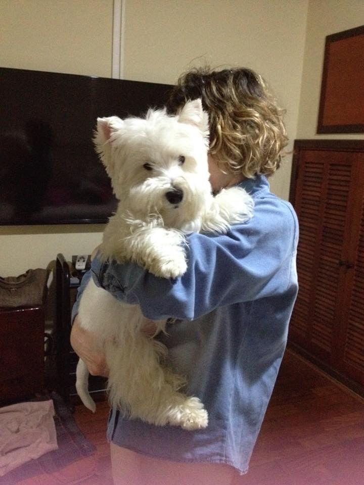 Pin By Kim Nichols On Anne S Westie Loves Westie Puppies Westie Dogs Westies