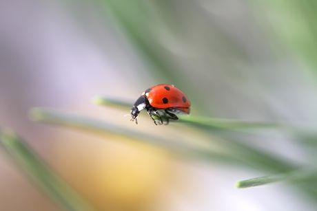 V tráve žijú, ver mi, muzikanti čierni. Cvrlikajú z lúčky celkom malé. (cvrčky) Na slnečnicovom kvete pasie sa, to iste viete. Líže nektár, ba aj peľ, veľký, čiernožltý. (čmeliak)