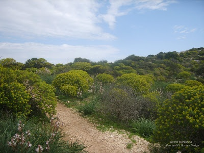 Mercurellis Garden Design: The Devil Saddle - an amazing spot of Sardinia!