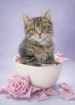 """""""Tea Cup"""" Kitten ? :)"""