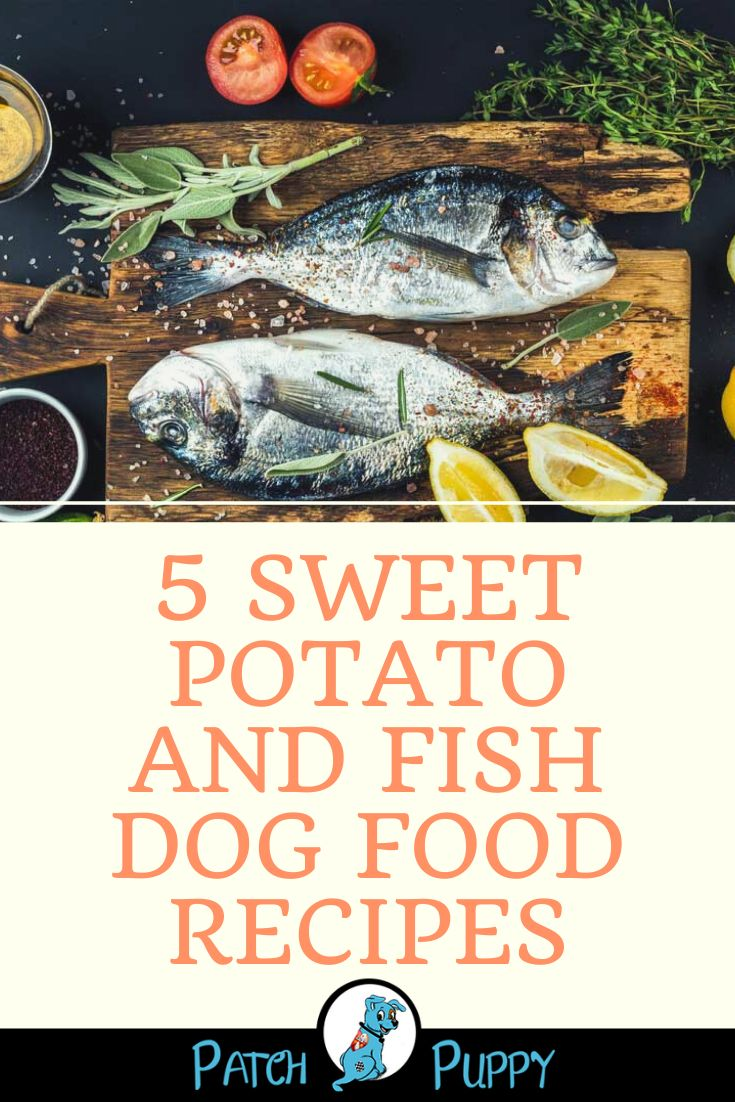 performatrin ultra dog food salmon