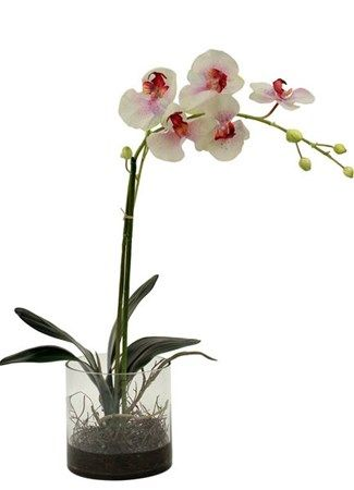 Phalenopsis Orchid (Silk)