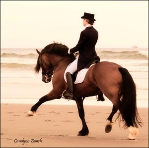 Cardi, FEI Dressage Pony