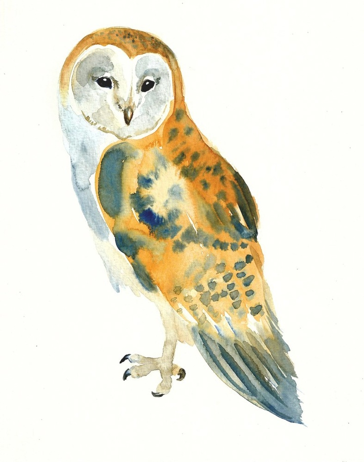 304 best Hiboux images on Pinterest | Owl art, Owls and ...