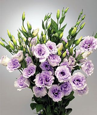 how to care for cut lisianthus flowers