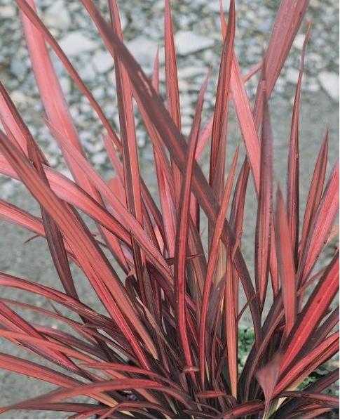 Les 25 meilleures id es concernant plantes m diterran ennes sur pinterest maisons for Comarbuste a feuille rouge