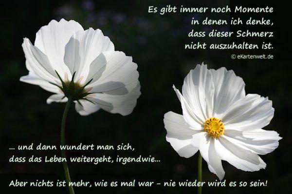 dreamies.de (iezabla9fab.jpg)                                                                                                                                                                                 Mehr