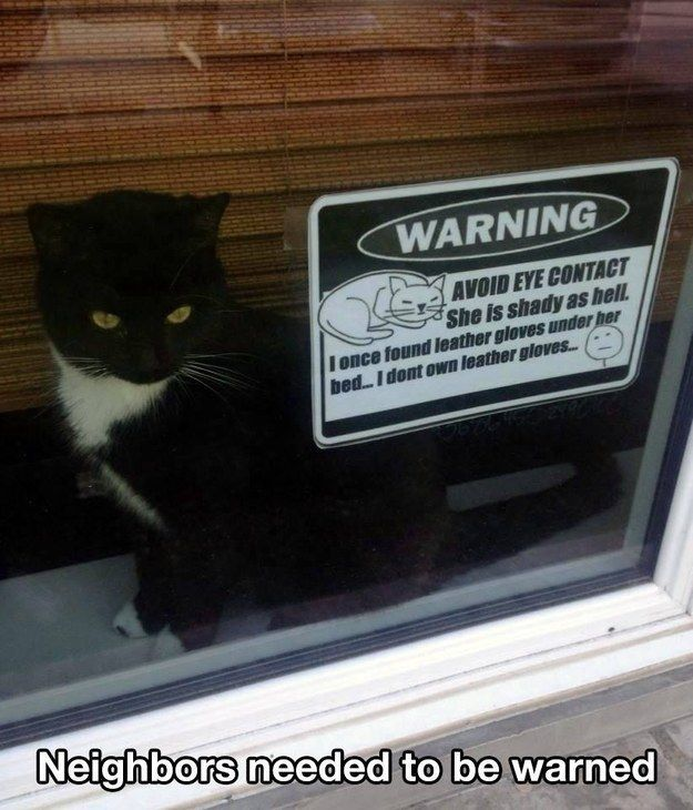 And this cat. | 24 Warning Labels That Need Warning Labels