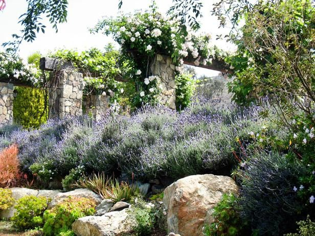"A luxurious sweep of lavender flanks this very French hillside garden designed by Shellene Mueller. Stone boulders echo the rose- and vine-draped pillars above. French gardens ""celebrate the senses,"" Shellene says. ""You're visually stimulated, you're smelling lavender and thyme, there's interesting texture — all the senses are stimulated."""