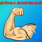 This 16 slide power point presentation introduces the Muscular System of the human body which can be used in an Anatomy/Physiology class and can also be used in Biology.  Filled with diagrams and pictures to enhance learning this editable power point is great for note taking skills for students of any level including English Learners, EL, as well as more advanced students.  $