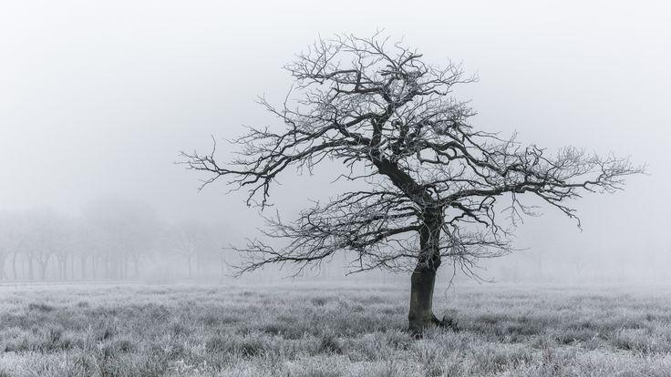 Tree by Arjen Dijk on 500px