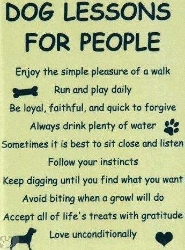 Dog Lessons for People: Enjoy the simple pleasure of a walk; run & play daily; be loyal, faithful, & quick to forgive;  always drink plenty of water; sometimes it is best to sit close & listen; follow your instincts; keep digging until you find what you want; avoid biting when a growl will do; accept all of life's treats with gratitude; love unconditionally.