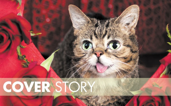 Indy loves Lil BUB, local cat-lebrity | Comedy | NUVO News | Indianapolis, IN