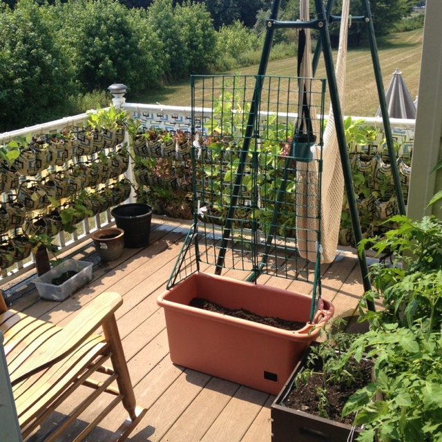 Better view of my tiny balcony lush w life! Cannot wait til plant Roma tomatoes!!!
