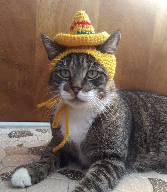 Sombrero Cat Hat knit hat for cat by StitchedAdventures on Etsy