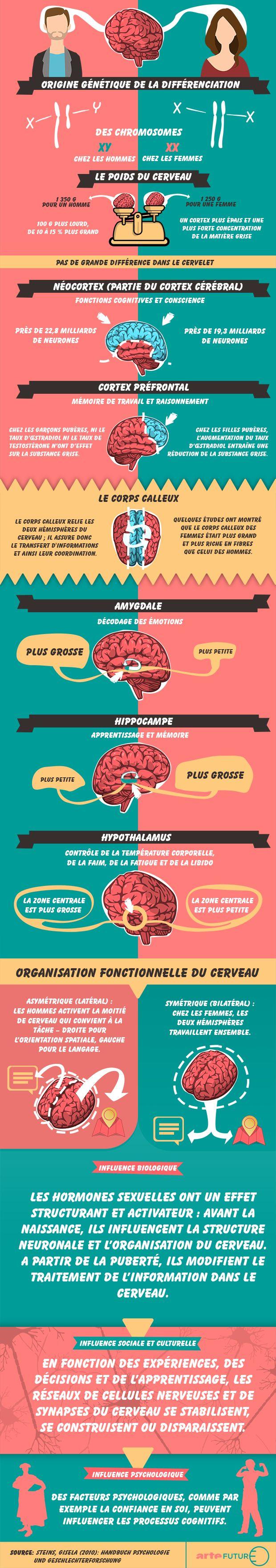 Infographie cerveau sexe png