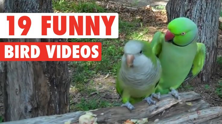 19 of the funniest birds you'll see this week. The Pet Collective is home to the…