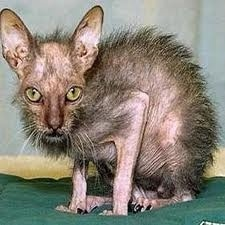 Ugliest cat I've ever seen.   Poor thing!!