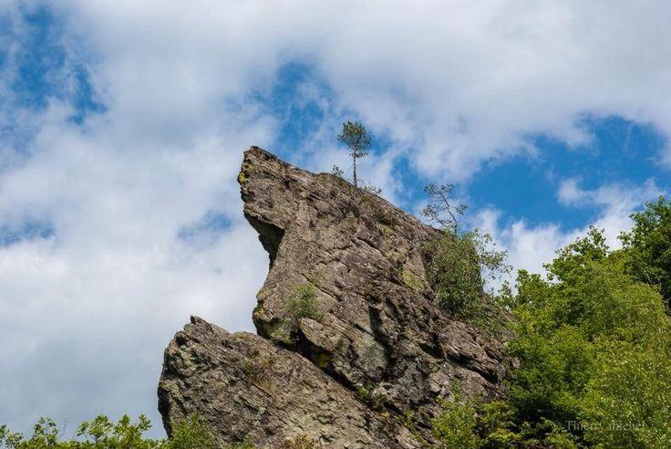 Thierry Michel photographies, paysages d'Ardennes.La Terre est si folle que le petit arbre tente d'accrocher le ciel.