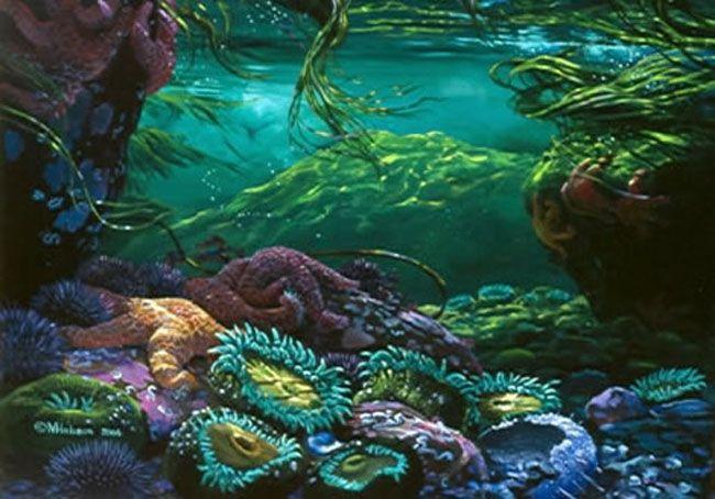 Mark Hobson Tide Pool Underwater Concept Art Pinterest