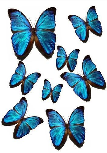 56 x VIVID BLUE BUTTERFLIES MIXED SIZES WEDDING BIRTHDAY CAKE TOPPERS EDIBLE WB6