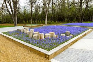 Natural Playground: artistic use of plantings. I think this is grape hyacinth…