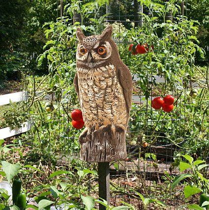 1000 Images About Jardim Com Coruja On Pinterest