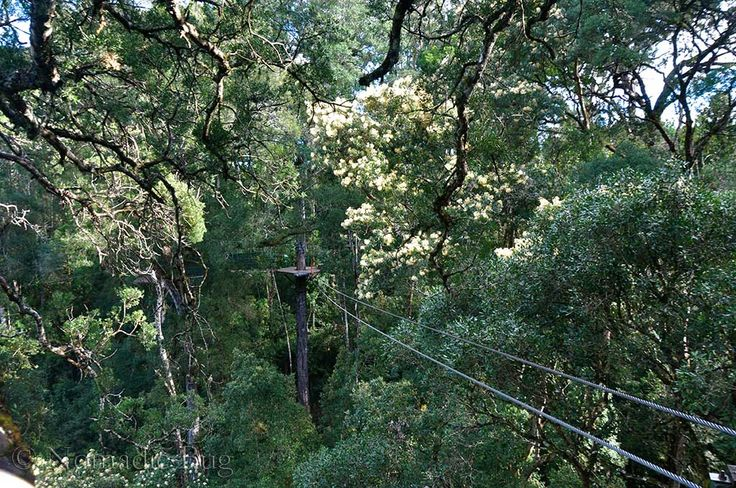 Flying through the canopy, Tsitsikamma Canopy tours, Garden Route, South Africa Nomadic Existence