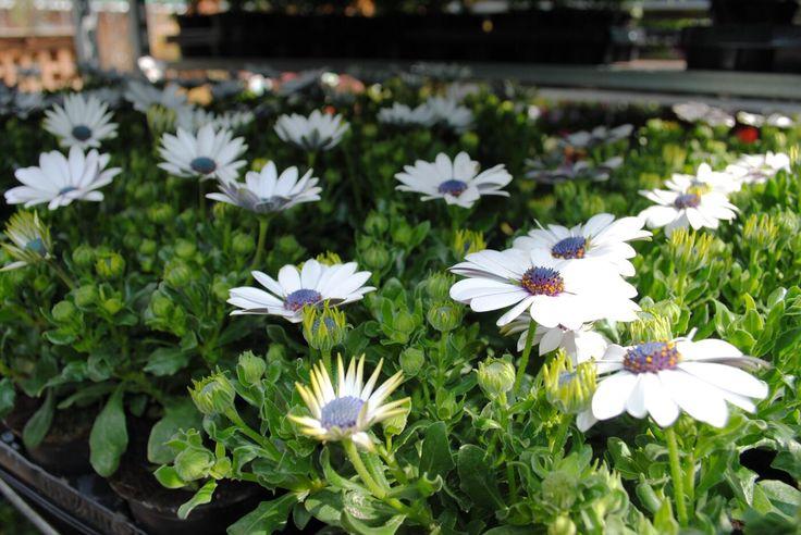Уличные растения, садовые цветы