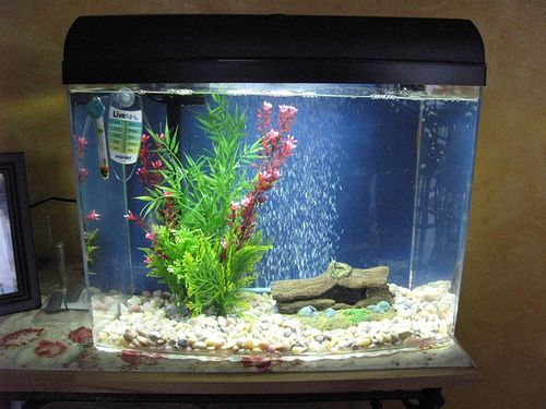 20 best my pet dreamboard images on pinterest pet for Cycling a fish tank