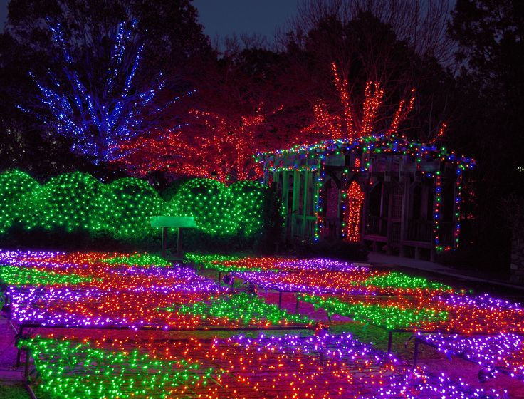 Winter Lights at the NC Arboretum in Asheville