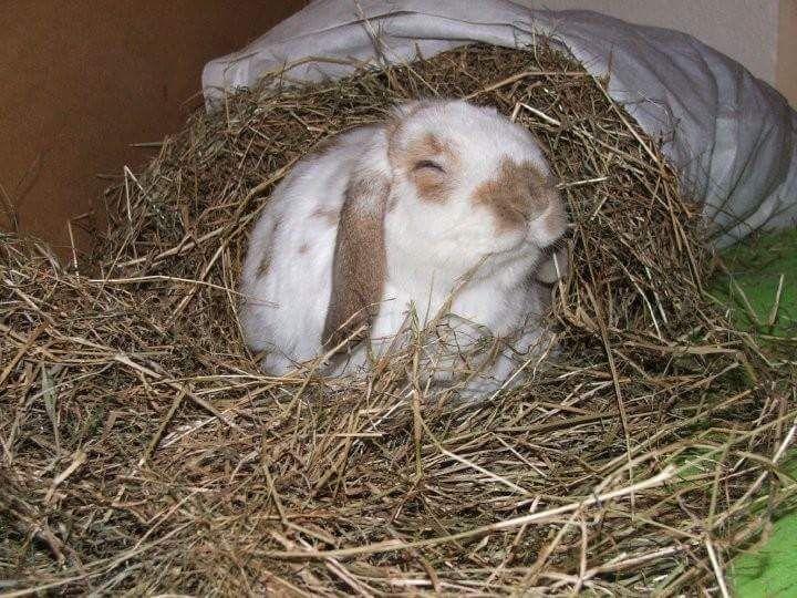 Harry enjoying his hay