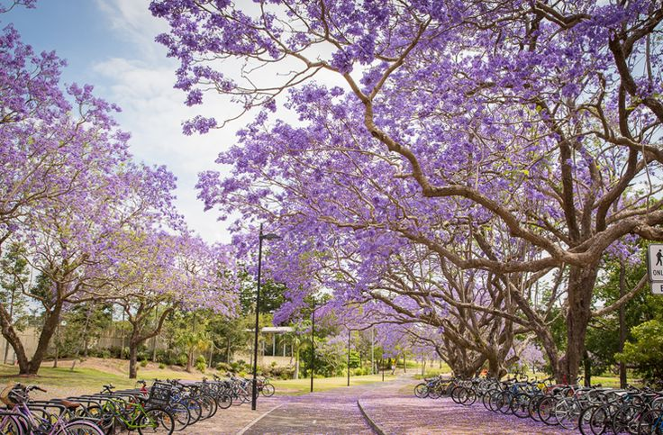 Here are 6 of Brisbane's prettiest walking tracks to get out and about this spring.