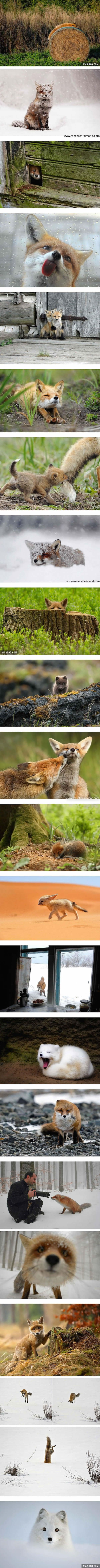 22 Photos Make You Fall In Love With Foxes (#2,8,11 By Roeselien Raimond ) - 9GAG