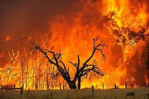 The Black Saturday Bushfires is the name given to the bushfires which started on the 7th of February 2009 in Victoria, Australia.