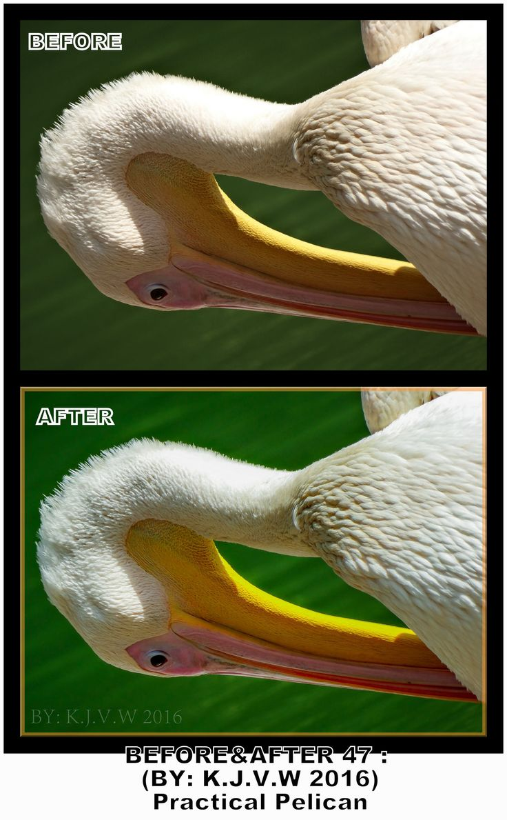 https://flic.kr/p/JZxjyW | Before AND After : 46 | What's the title?  Practical Pelican.  Where was this?  In Zoo Veldhoven.  What did you change?  Well: Saturation,Less overexposure and softness where the key elements who changed this.  Finally, Your Plan?  1-Captured the shot 2-converted image on the PC 3-Opened image in RAW-editor (Of Photoshop Elements) 4-Made my changes 5-Saved as DNG (RAW) file 6-open in Photohop elements  7-Duplicate background layer (Renamed: Border) 8-picked color…
