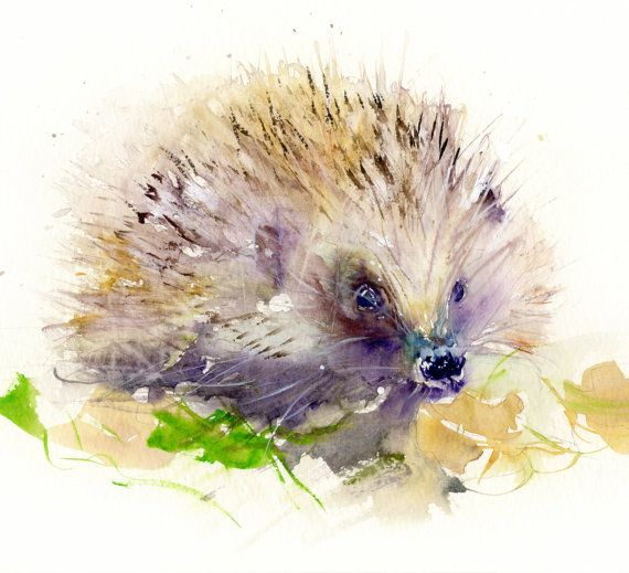 Contemporary limited edition print of my original watercolour painting HEDGEHOG…