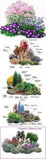 клумба непрерывного цветения из многолетников схемы: 14 тыс изображений найдено в Яндекс.Картинках