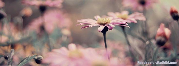 Facebook Titelbild Blumen Facebook Titelbild