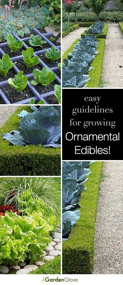 Easy guidelines for growing ornamental edibles! by TamidP