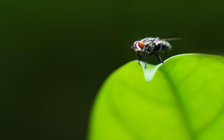 Animal - fly Wallpaper