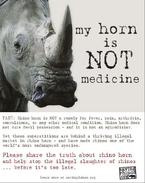 17 Best images about Rhino Facts on Pinterest | Horns ...