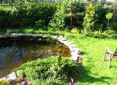 Ewa in the Garden: Pond algae bloom. Ugh! How to get rid of algae.