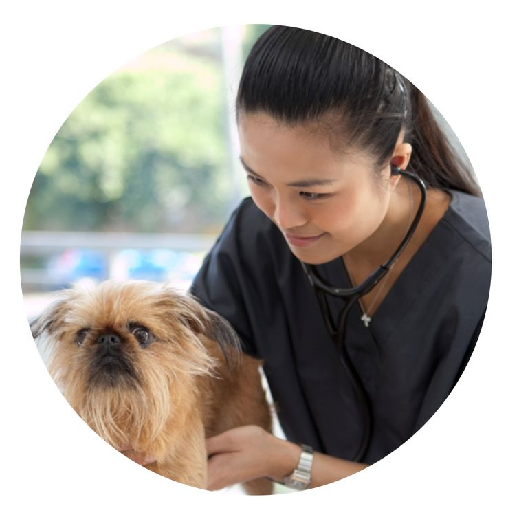 Dr Cherlene Lee is the Principal Veterinarian at My Vet Animal Hospital. She graduated from the University of Sydney and has worked in various rural and city based practices across NSW. Cherlene thrives on small animal medicine and soft tissue surgery.     Cherlene shares her advice on what to watch out for when it comes to ear infections in dogs!