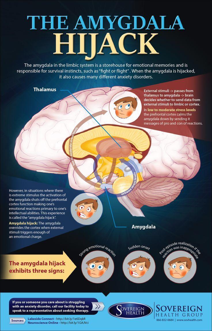 Infographic: The Amygdala Hijack www.sovhealth.com                              …