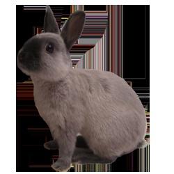 * Pepper * My Netherland Dwarf Bunny ^_^
