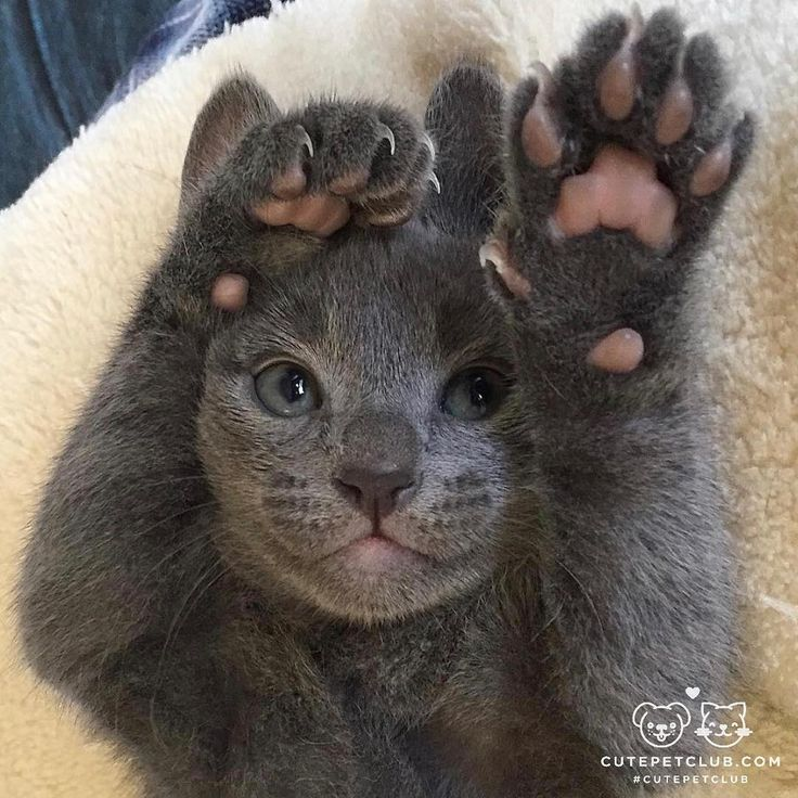 HANDS UP ;-)))))))  cute kittycat
