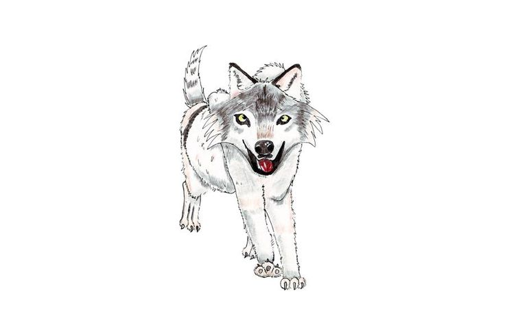 This is an illustration of a grey wolf drawn with watercolour pencils and edited using GIMP. It is instantly downloadable at the price of $4.56 on Etsy (see link above). It can be used as an illustration for a nursery room, a boy's room, as a decoration for a T-shirt or any other fabric you wish; it can also be used as a design.