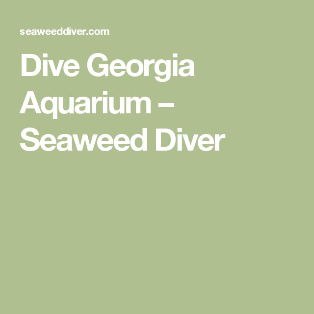 Dive Georgia Aquarium – Seaweed Diver